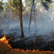 Heat Waves Cause Bush Fires — Stock Photo #12206909