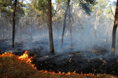 Heat Waves Cause Bush Fires — Stock Photo