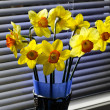 Daffodils Day — Stock Photo #12288171