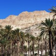 Travel Photos of Israel - Ein Gedi Spring — Stock Photo