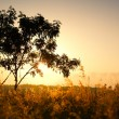 Stock Photo: Single tree on morning summer sunlight