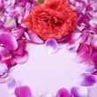 Rose and rose petal — Stockfoto