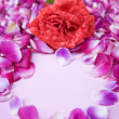 Rose and rose petal — Stock Photo