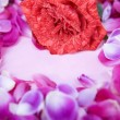 Rose petals surrounded small pink paper — Photo