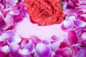 Rosenblüten umgeben kleine rosa papier — Stockfoto