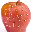 Maggots come out from rotten apple - Stock Photo