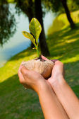 Crece la semilla — Foto de Stock