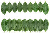 Green leafs for border and design — Stock Photo