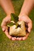 Plant this tree seed — Foto de Stock