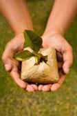 Plantar la semilla de este árbol — Foto de Stock