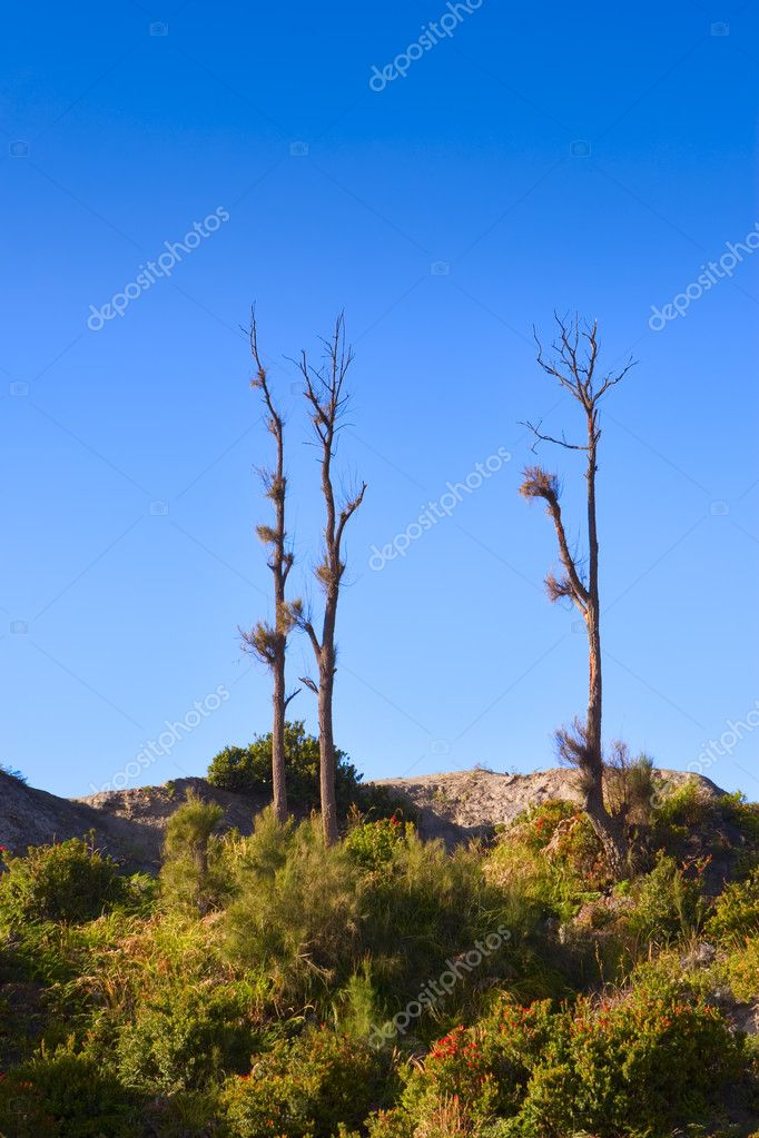 Just found those trees in nice composition and take a shot of them. — Stock Photo #11079398