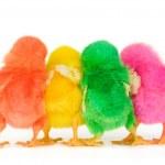 Chick are in secret discussion — Stock Photo