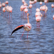 Pink flamingos — Stock Photo #10886391