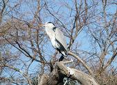 Camargue national wildlife reserve — Stock Photo