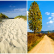 Stock Photo: Four seasons landscape
