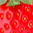 Strawberry closeup detail - Stockfoto