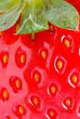 Detalle de fresa closeup — Foto de Stock