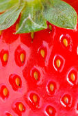 Strawberry closeup detail — ストック写真