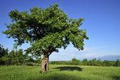 Bellissimo paesaggio con albero — Foto Stock