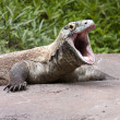 Komodo Dragon mouth open — Stock Photo