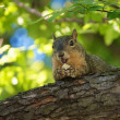 Stock Photo: Elated Squirrel with Bread