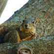 Squirrel on Branch — Foto de stock #11344899