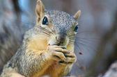 Nut Snack — Stock Photo