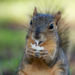 Lunchtime for Squirrel — Stock Photo
