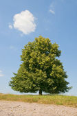 Tree and cloudy sky — Stockfoto