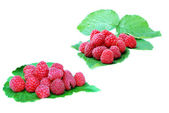Ripe raspberries on a green leaf on white background — Stock Photo