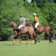 Foto Stock: Polo match