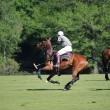 Polo game — Stock Photo #10781856