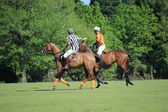 Polo match — Stockfoto