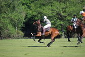 Polo game — Stock Photo