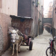 Stock Photo: Donkey in Marrakech