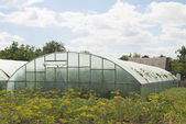 Homemade greenhouse (glasshouse) on the plot — Stock Photo