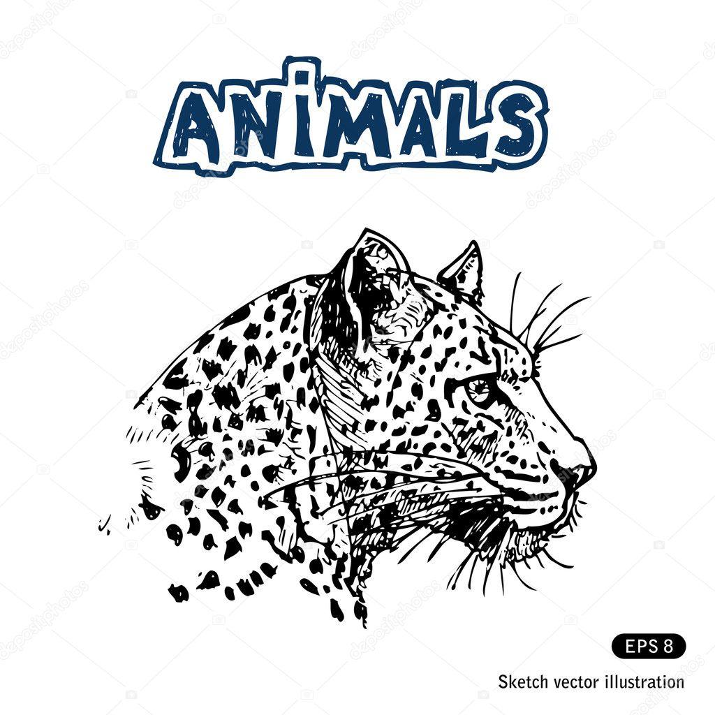 Jaguar — Vector de stock #11358344 — Depositphotos
