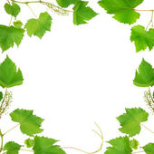 Frame made of vine leaves isolated on white background — Stock Photo