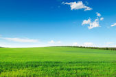 Picturesque green field — Stock Photo