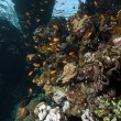 Stock Photo: Tropical reef under the jetty.