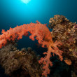 Cnidariin Red Sea. — Stock Photo #10738146