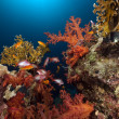 Tropical reef and fish in the Red Sea. - Foto Stock