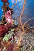 Tropical reef in the Red Sea. — Stock Photo
