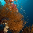 Branching black coral and  fish in the Red Sea. — Stock Photo