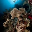 Stock Photo: Slimy leather coral and sun in Red Sea.