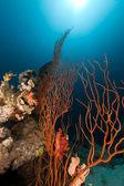 Červený shluk bič a oceán — Stock fotografie
