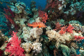 Coral reef in the Red Sea. — Stock Photo