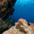 Tropical reef in the Red Sea. - Stock Photo