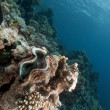 Giant clam and tropical underwater life in the Red Sea. - Stock Photo