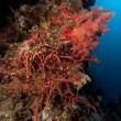 Toxic finger coral and tropical underwater life in the Red Sea. - Stock Photo